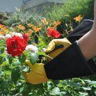 Premium-Gartenhandschuhe PROFESSIONAL GH 3051